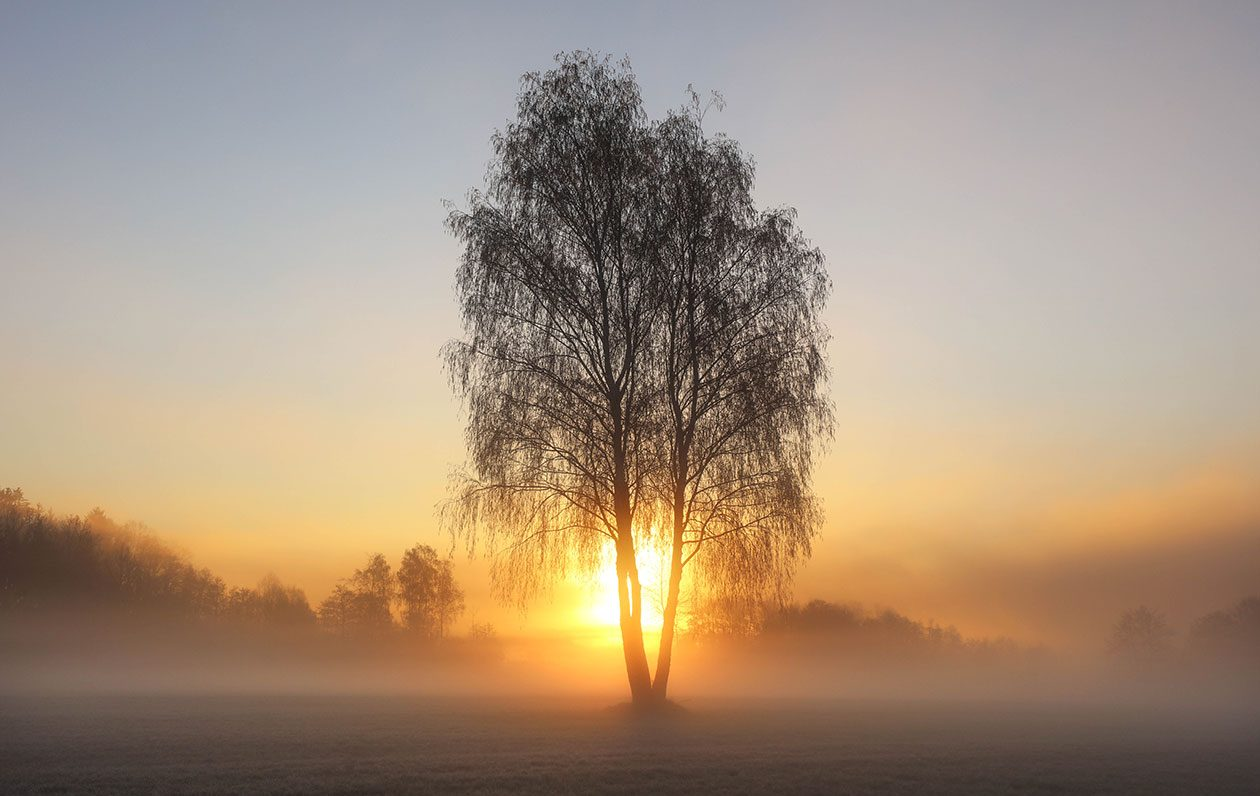 Fotografie von Sonnenaufgang über Feldern